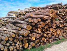 Bois des Domes, spécialiste en bois de chauffage