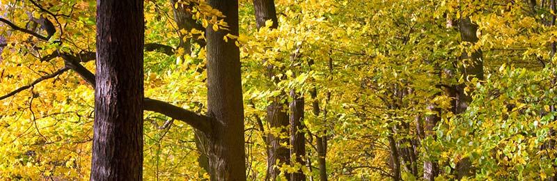 Bois de chauffage qualité chêne, frêne, hêtre, charme